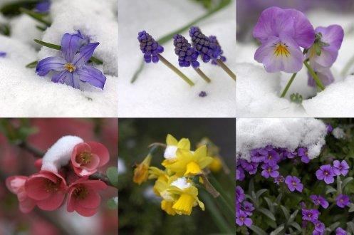 Flores no meio da neve